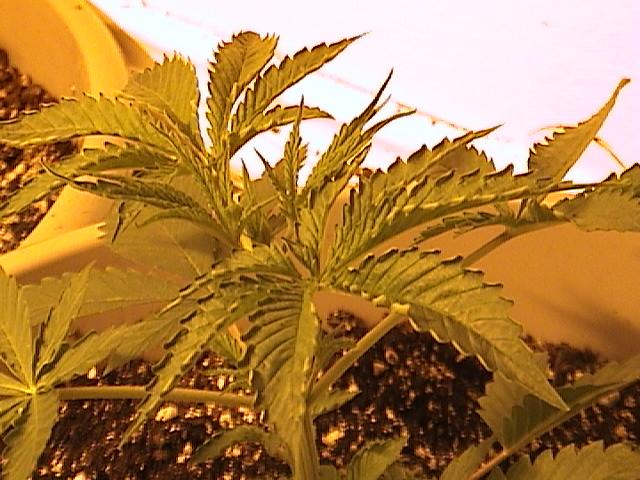 plants 004.jpg