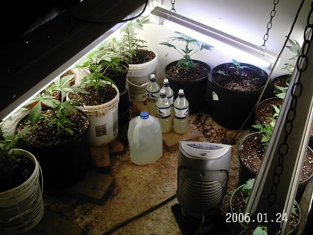 plants 008.jpg