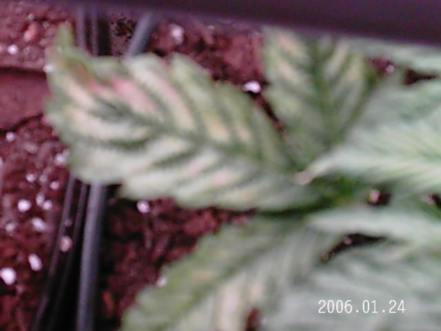 plants 015.jpg