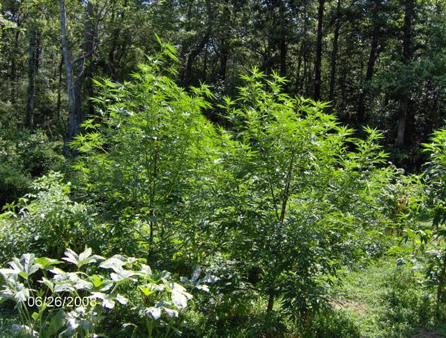 Plants 08 043.jpg