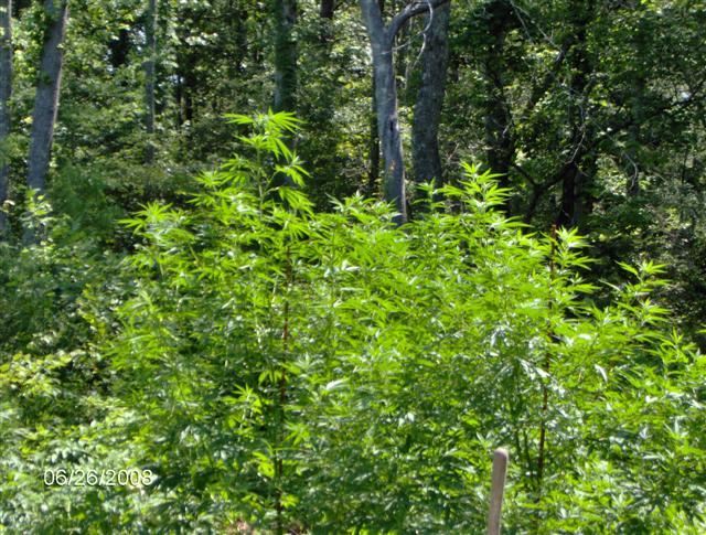 Plants 08 071.jpg