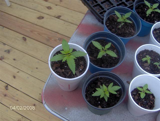 Plants 4 08 002.jpg