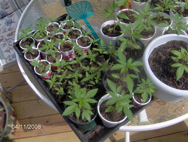 Plants 4 08 012.jpg