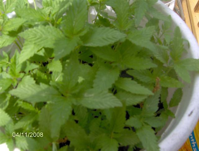 Plants 4 08 013.jpg