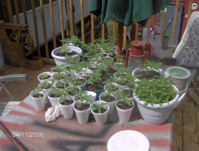 Plants 4 08 014.jpg