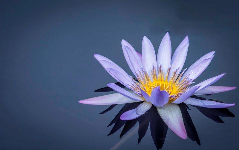 prettyflowers41.jpg