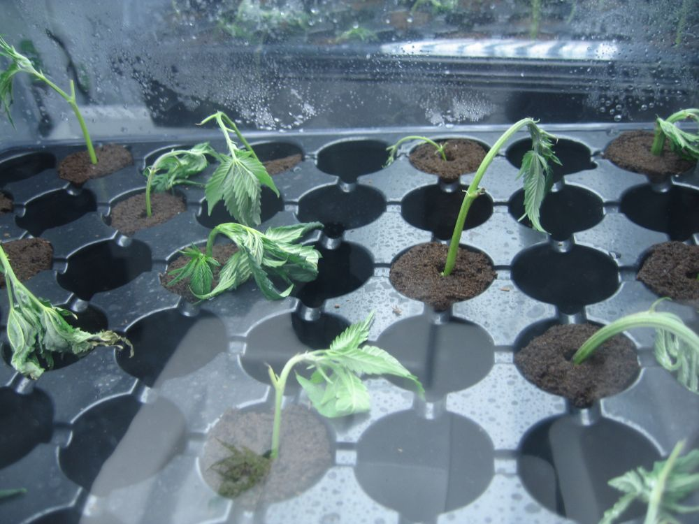 replanted 3.jpg