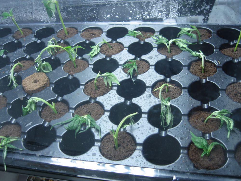 replanted1.jpg