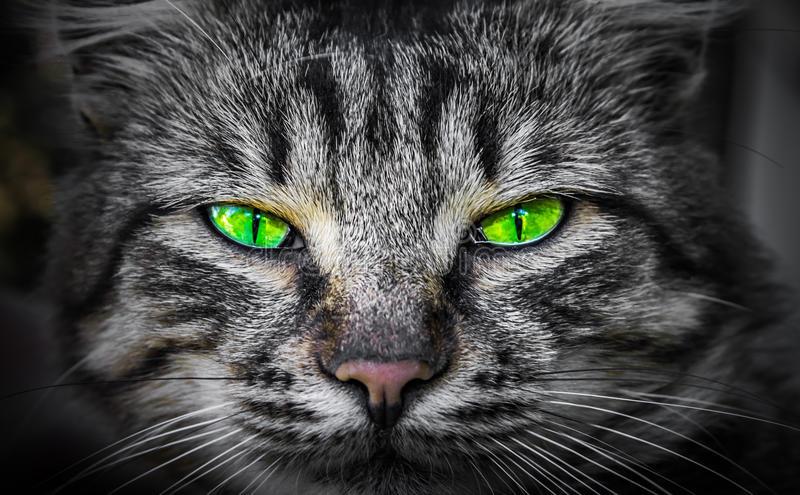 severe-predatory-evil-cat-eyes-77679888.jpg