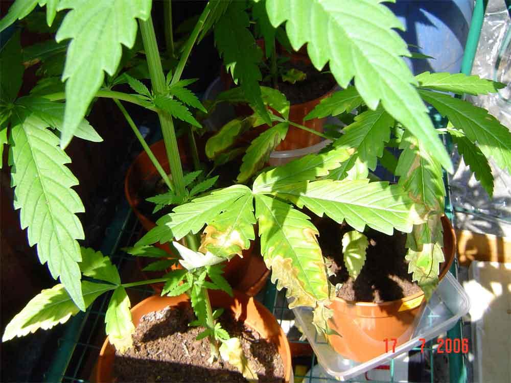 sick-plant3.jpg