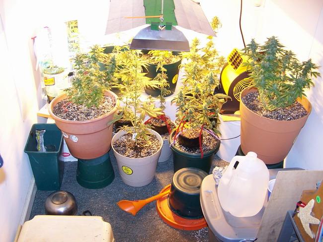 SS 723 grow space.jpg