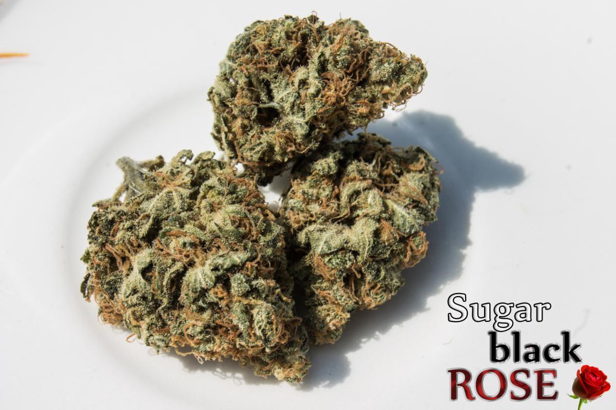 SugarBlackRose.jpg