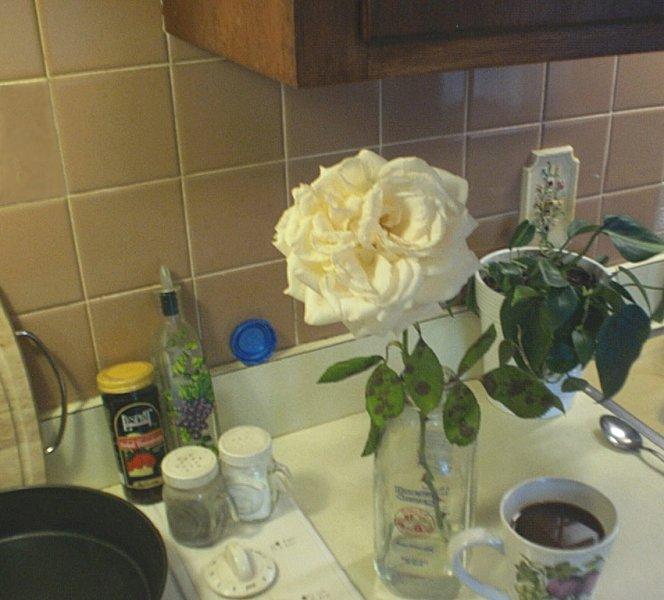 The last rose.jpg