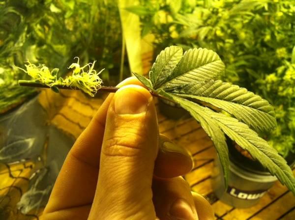weed 012.jpg