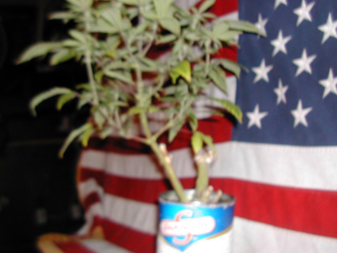 x mas micro grow 004.jpg