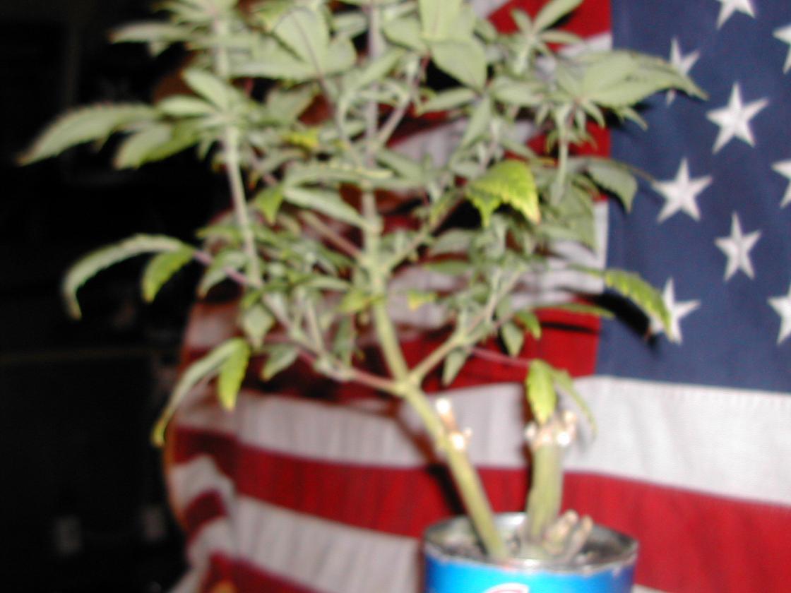 x mas micro grow 005.jpg